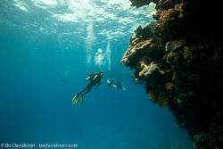 BD-100924-Fury-Shoal-2344-Homo-sapiens.-Linnaeus.-1758-[Diver].jpg